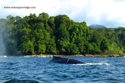Nuqui ballenas 12