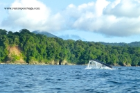 Nuqui ballenas 13