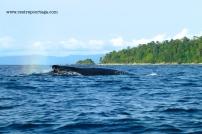 Nuqui ballenas 14