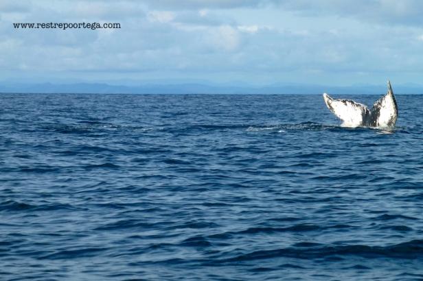 Nuqui ballenas 15