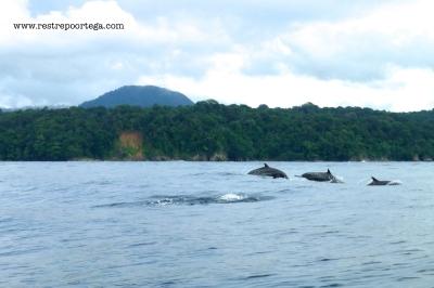 Nuqui ballenas 17
