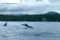 Nuqui ballenas 18