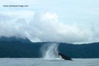 Nuqui ballenas 19