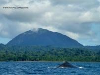 Nuqui ballenas 2