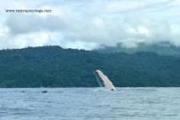 Nuqui ballenas 20