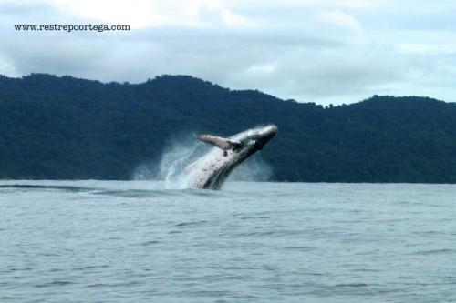 Nuqui ballenas 21