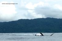 Nuqui ballenas 22