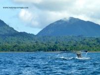Nuqui ballenas 3