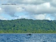 Nuqui ballenas 4