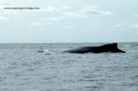 Nuqui ballenas 5