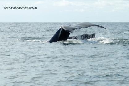 Nuqui ballenas 6