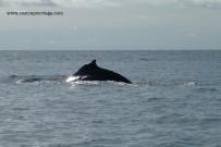 Nuqui ballenas 7