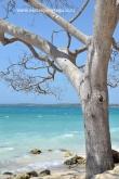 Playa Blanca Barú 2