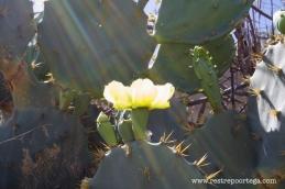 Canoa Quebrada 7