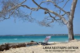 COL11-beach tree Colombia Baru Playa Blanca Caribbean ocean holiday nature horizontal