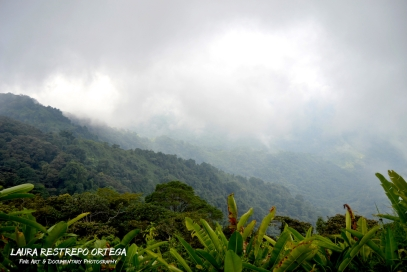 COL6-mountains Minca Colombia travel fog green cloud nature horizontal