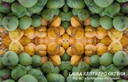 RFX10-coconuts olinda 1 1 FINAL