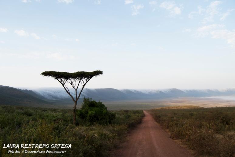 TNZ7-Africa Ngorongoro