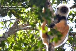 MDG4-lemurs