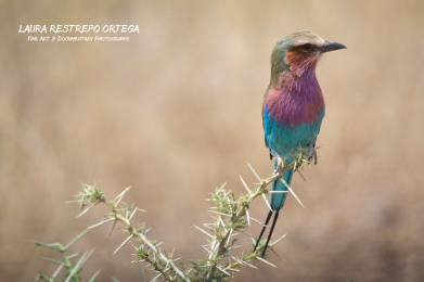 TNZ45-Africa birds 1