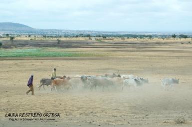 TNZ56-Masai
