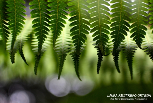 NTZ13-leaf fern Estrella Colombia green nature horizontal 2