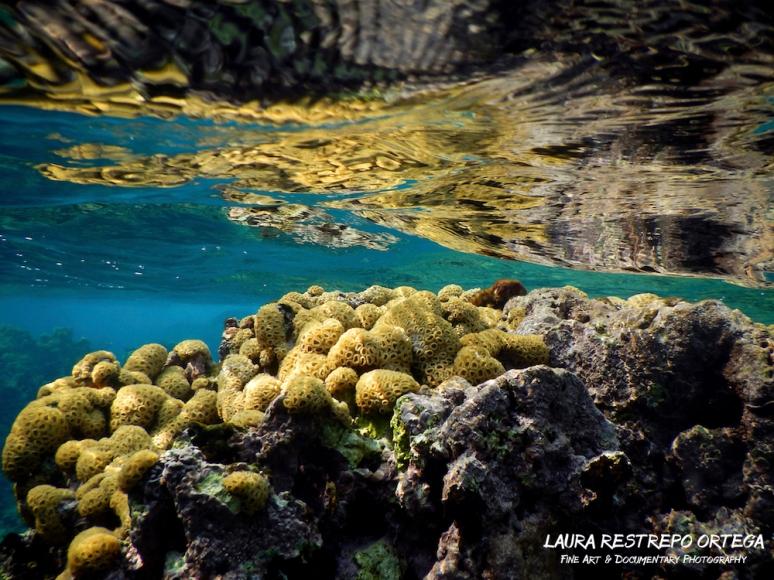 NTZ20-coral Islas Rosario 2