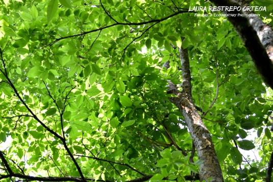 NTZ21-tree Estrella